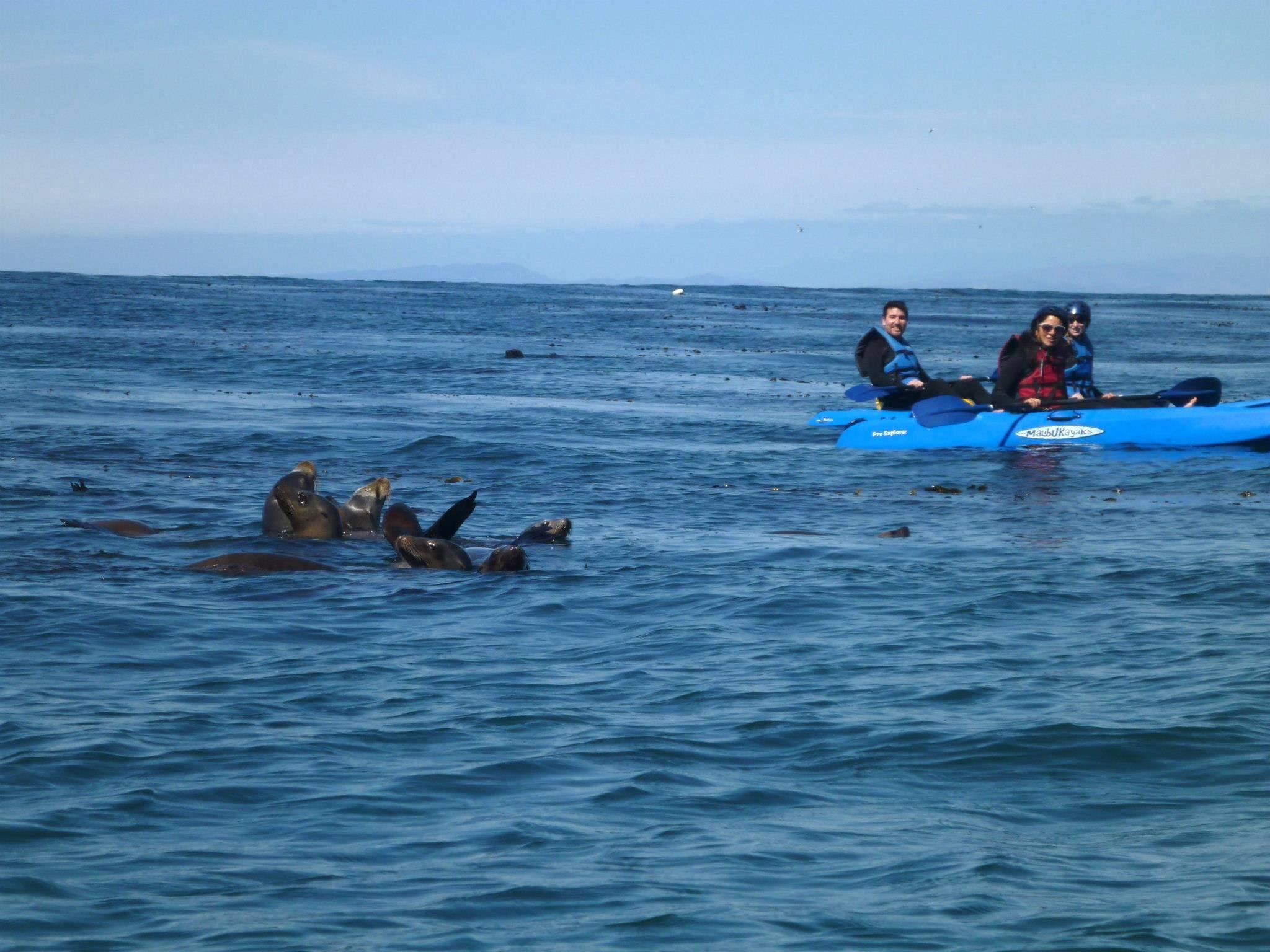 La Jolla Sea Caves Kayak Tour Hike Bike Kayak Adventure Tours